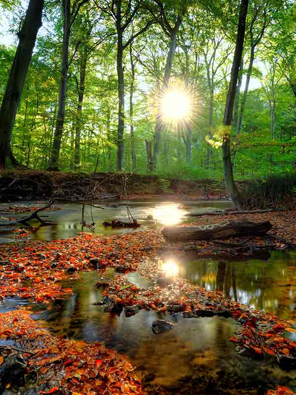 a forest scene by a stream with the sun shining through the trees